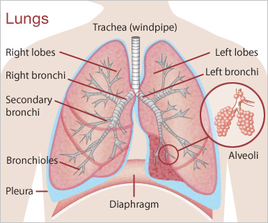 Lung Cancer: Symptoms, Causes, Risk Factors and Treatments