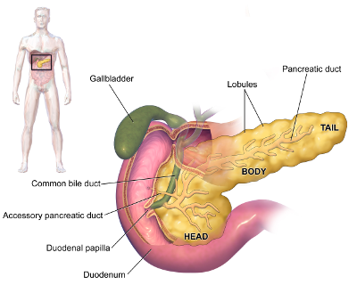 Pancreatic Cancer: Symptoms, Causes, Risk Factors and Treatments