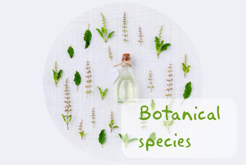 Essential oils, essential oil superior quality, botanical species