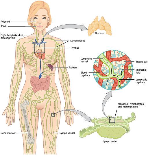 hodgkin cancer causes vierme rotunde și de tip uman